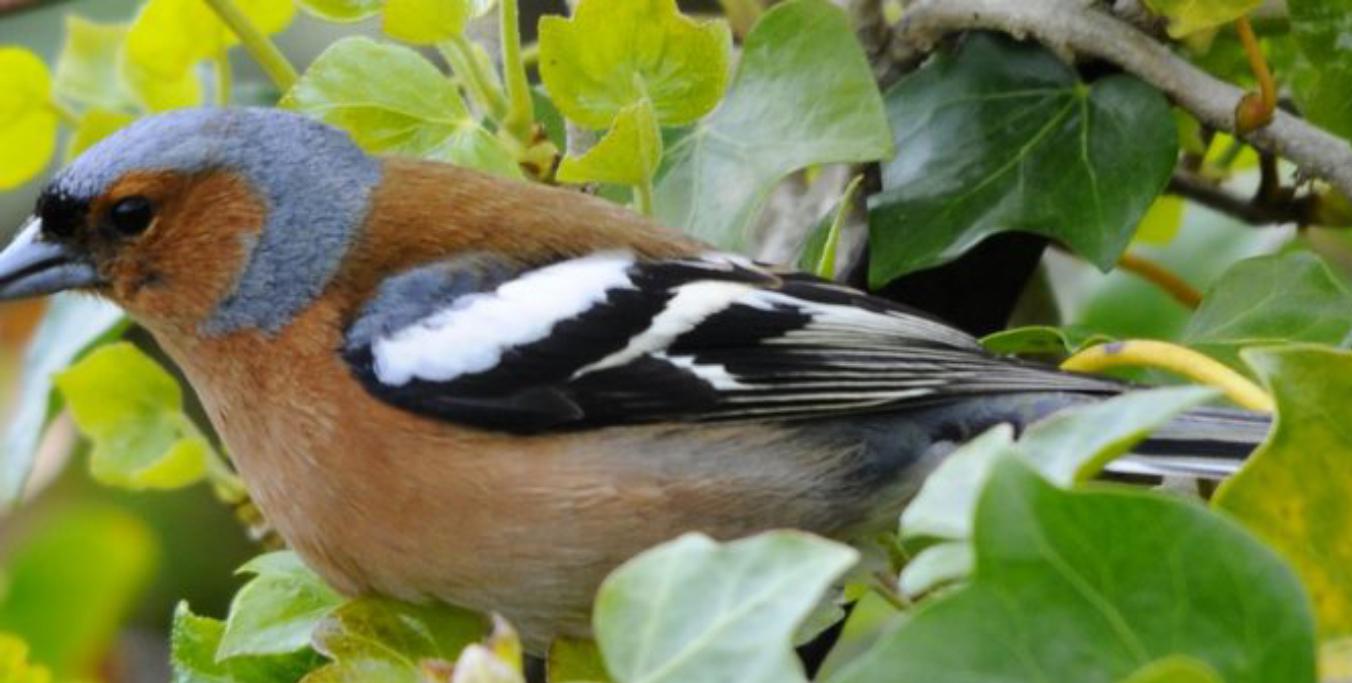 CANCELLED Painshill Bird Song Walk