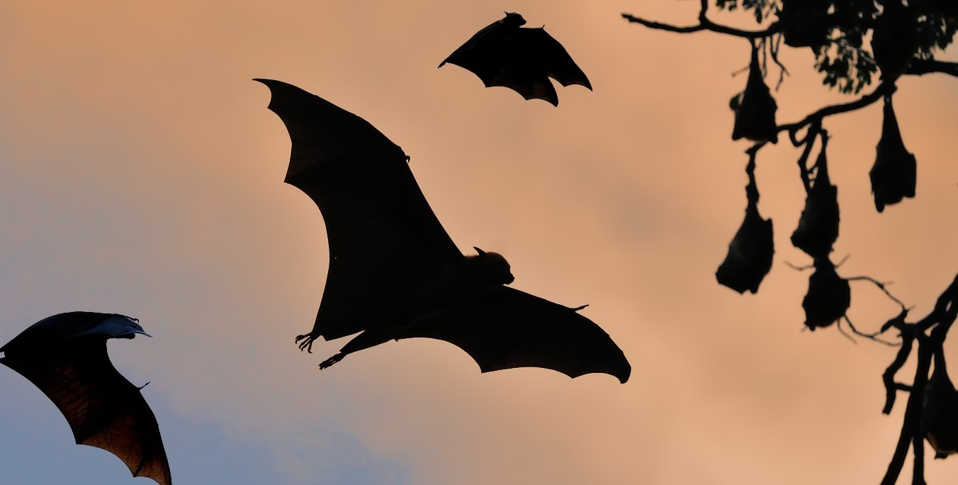 Bat Walk *SOLD OUT*