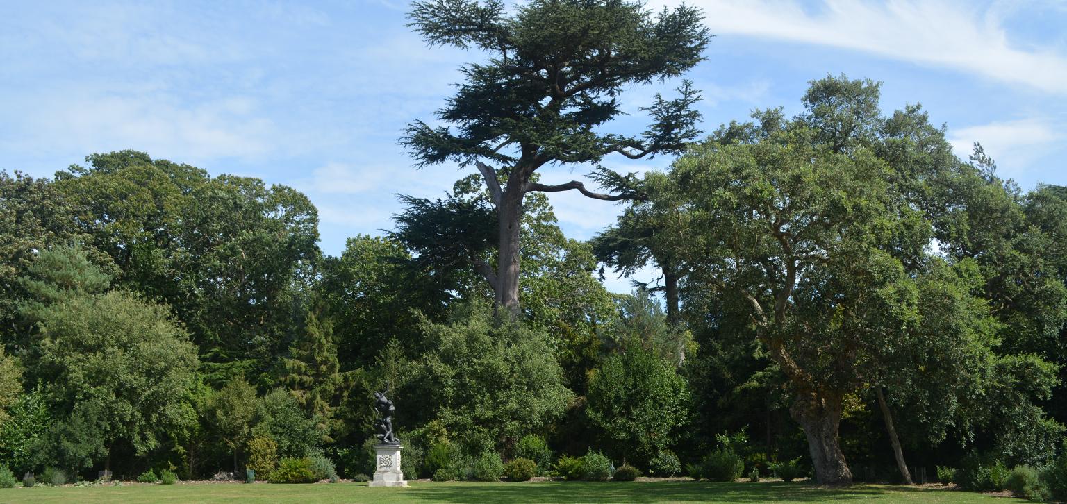 Cedar at Painshill
