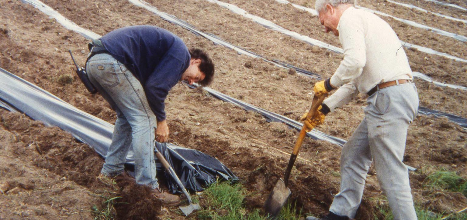 Digging up vineyard pre-restoration