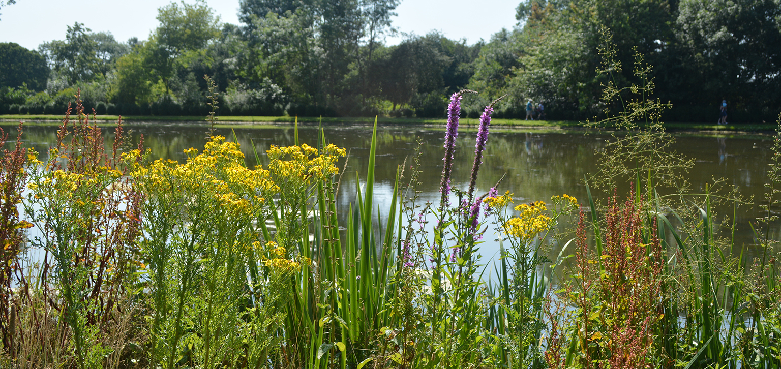 Flowers by lake in Summer