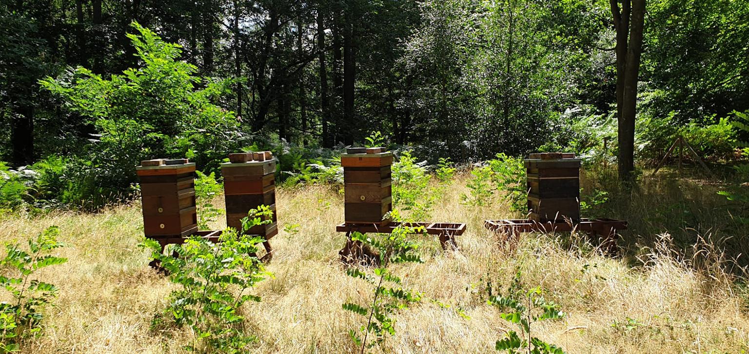 Beekeeping at Painshill