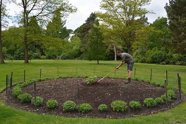 Painshill Plantings - before