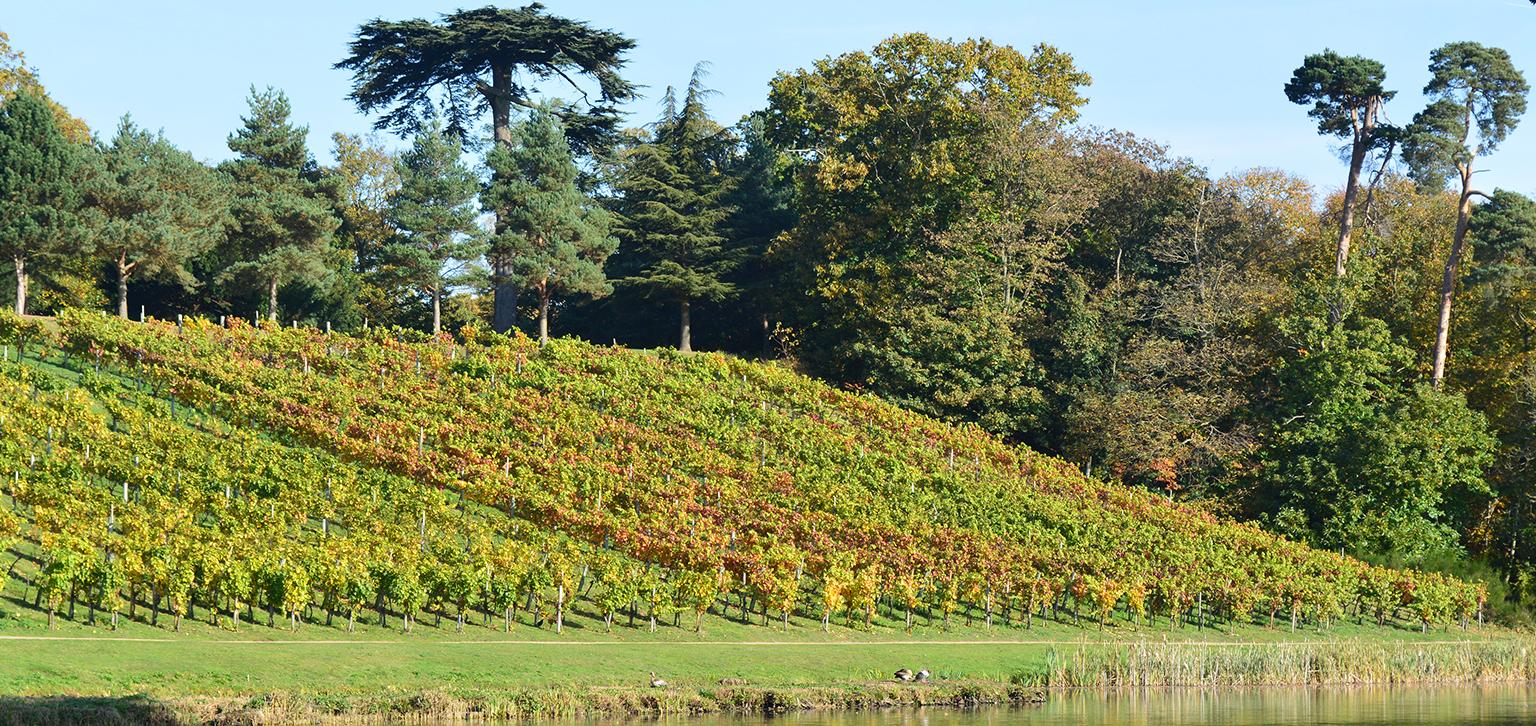 The vineyard in autumn