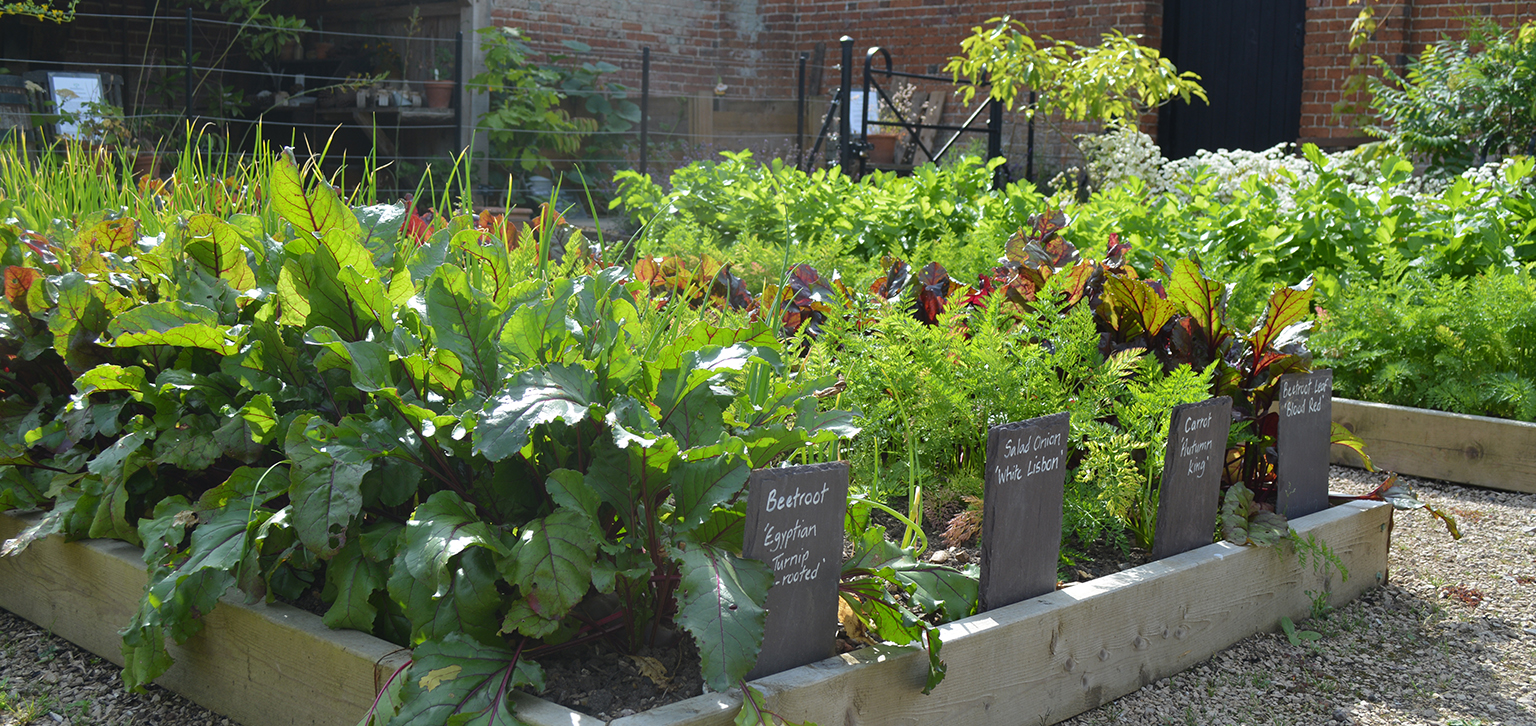Raised beds in summer