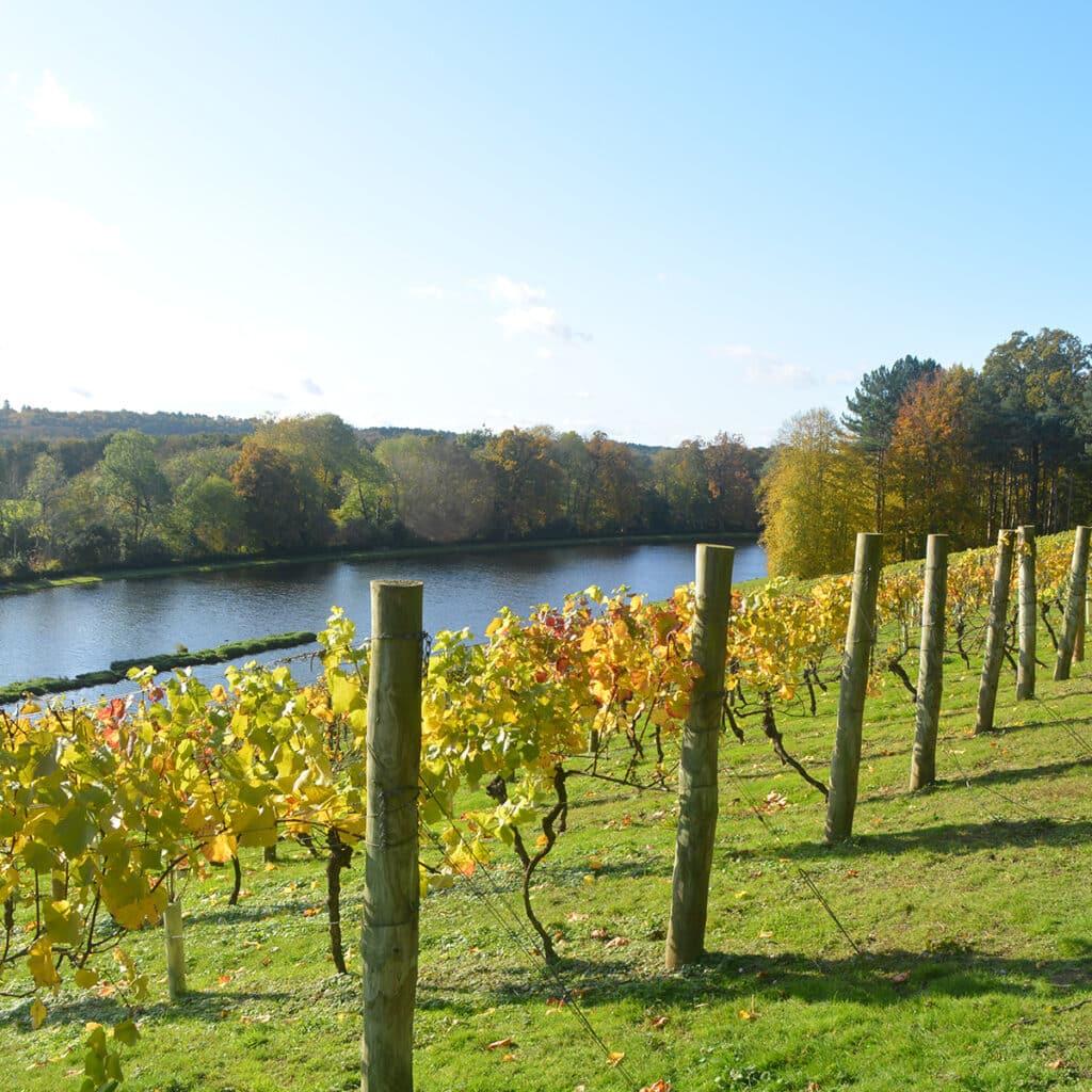 Amble along the vines
