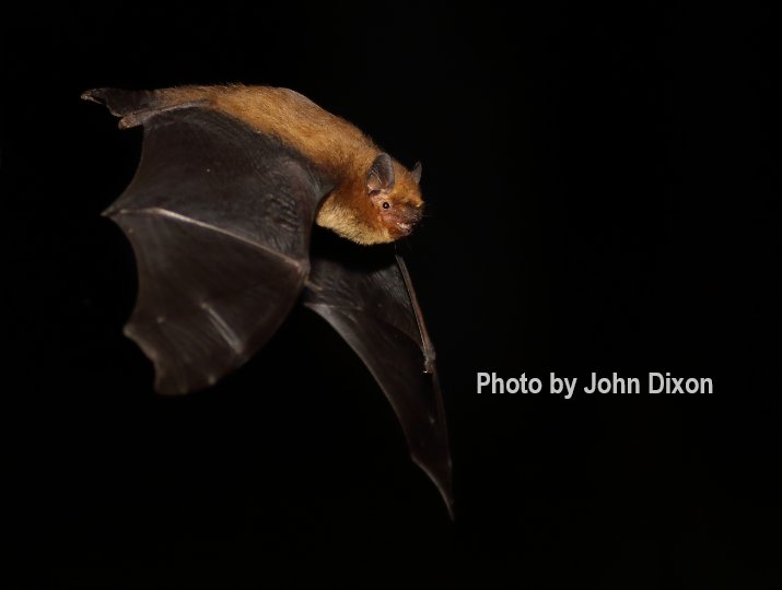 Guided Bat Walk *SOLD OUT*